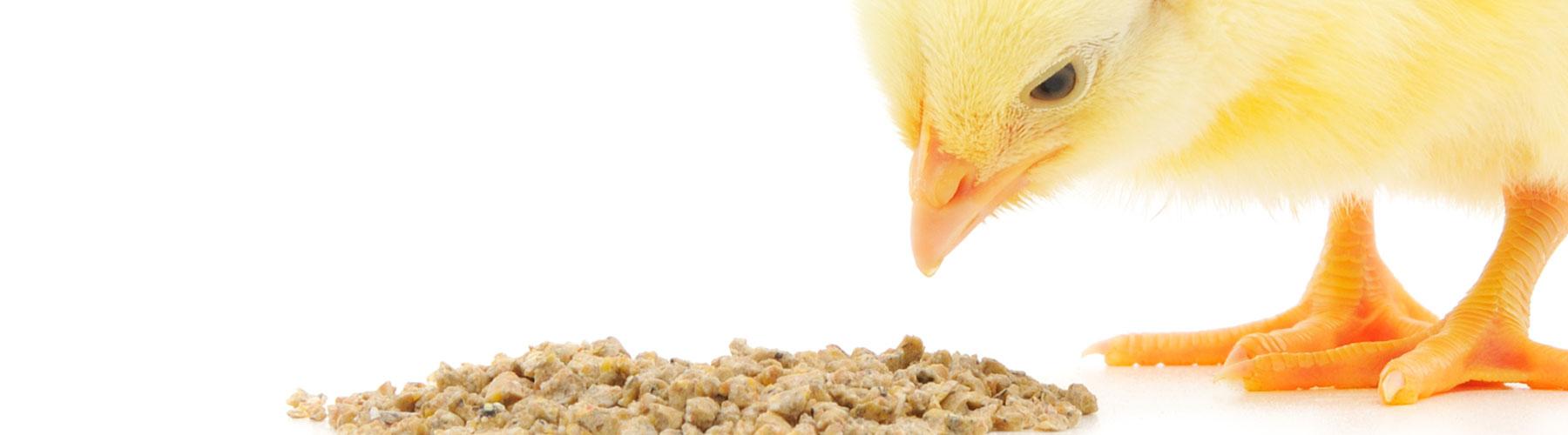 09510baf0ae2b animal feed milling